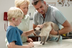 Accounting for Veterinarians in Fresno